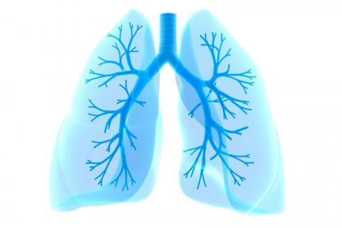Resultado de imagen de pùlmon
