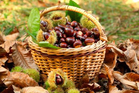 Resultado de imagen de otoño y castañas