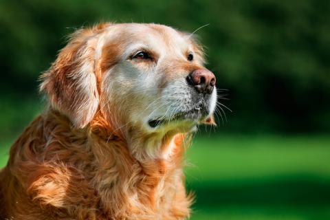 Claves para alargar la vida de tu perro