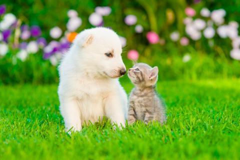 C mo conseguir una convivencia feliz entre perros y gatos for Como evitar los gatos en el jardin