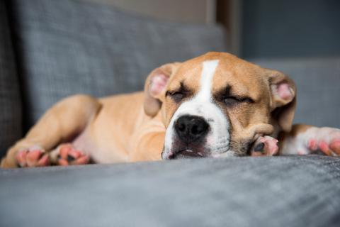 Perro durmiendo sobre un sofá