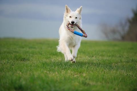 Perro practicando ejercicio físico