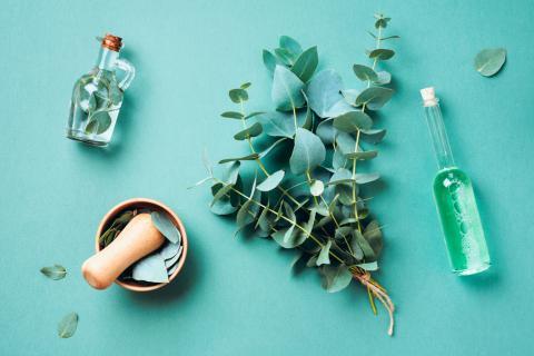 Propiedades y beneficios del eucalipto