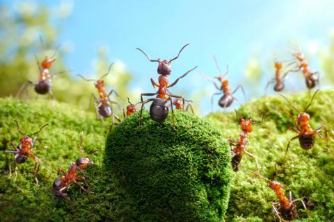 Granja de hormigas