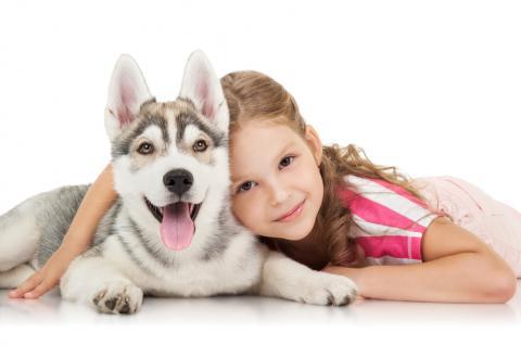Una niña abraza a su cahorro de husky siberiano