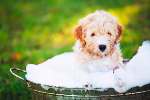 C mo ba ar a tu perro por qu es importante lavarle bien - Como banar a un perro ...