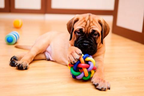 Cómo estimular al cachorro con juegos y actividades