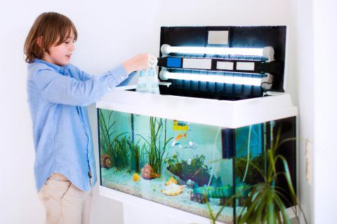 La importancia de un buen mantenimiento del acuario