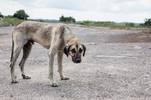 Perro abandonado con signos de desnutrición