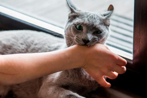 Resultado de imagen para Imagen de perros viralatas ocasionando mordeduras