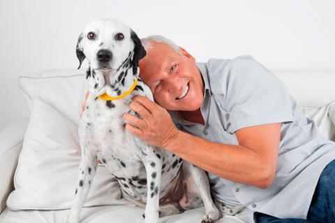 Perros ideales para acompañar a personas mayores