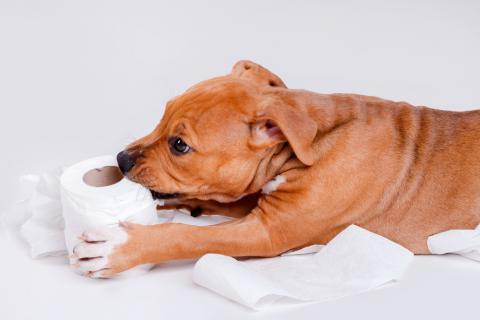 Perro mordiendo un rollo de papel higiénico