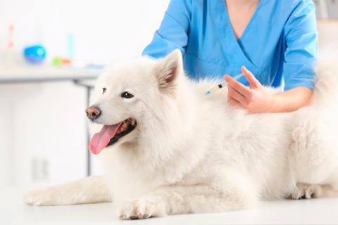 Resultado de imagen para como eliminar pulgas y garrapatas a mi perro