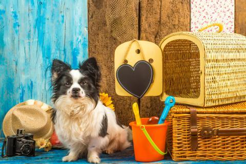Perro pequeño espera junto al equipaje de sus dueños