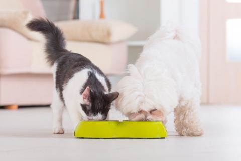 Perro y gato comiendo pienso