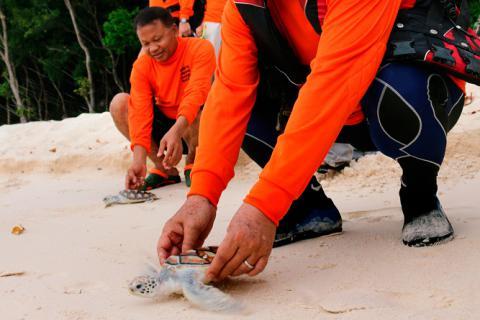 Colaborar como voluntario en una protectora animal