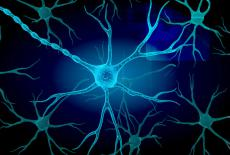 Neuronas motoras afectadas por esclerosis lateral amiotrófica