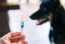 Murciélago portador de la rabia