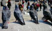 Grupo de palomas en una ciudad