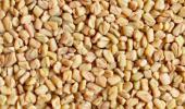 semillas sospechosas de ser el origen de E.coli
