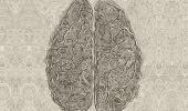 Cómo retrasar el envejecimiento del cerebro