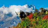 Las 211 nuevas especies descubiertas en el Himalaya