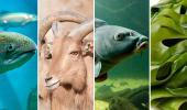 El Supremo amplía el catálogo español de especies exóticas invasoras