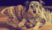 Dejar al perro mucho tiempo solo le puede afectar negativamente