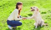 Donan perros adiestrados a víctimas de violencia de género