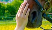 Una persona acaricia el morro de un caballo