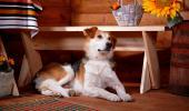 Un perro en el interior de una casa rural