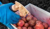 La OMS asocia el insecticida lindano y el DDT con cáncer