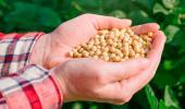 La proteína de soja mejora las enfermedades inflamatorias intestinales