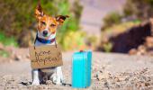 Un perro con un cartel en el que pregunta si le adoptan