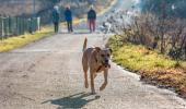 Qué hacer en caso de pérdida o robo de tu mascota