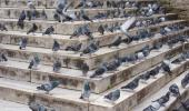 Plagas urbanas: peligro para la salud