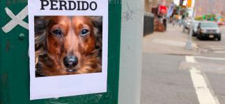 Qué hacer si se pierde tu mascota: 8 consejos para recuperarla