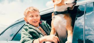 Consejos para organizar el viaje con tu mascota