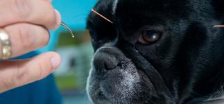 Acupuntura veterinaria, ¿es eficaz en nuestras mascotas?