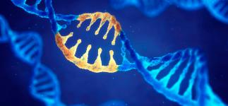 El 66% de los cánceres se deben al azar, dificultando su prevención