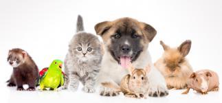 ¿Qué mascotas prefieren los españoles?