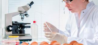 Nueva vacuna por vía oral para prevenir la salmonella