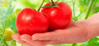 Consumir tomate podría ayudar a reducir los efectos del alcohol