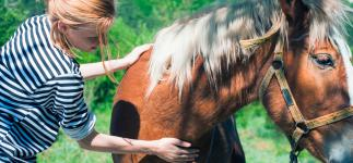 Cólico equino: cómo aliviar el dolor de tu caballo