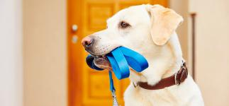 5 Consejos para elegir la correa más adecuada para tu perro