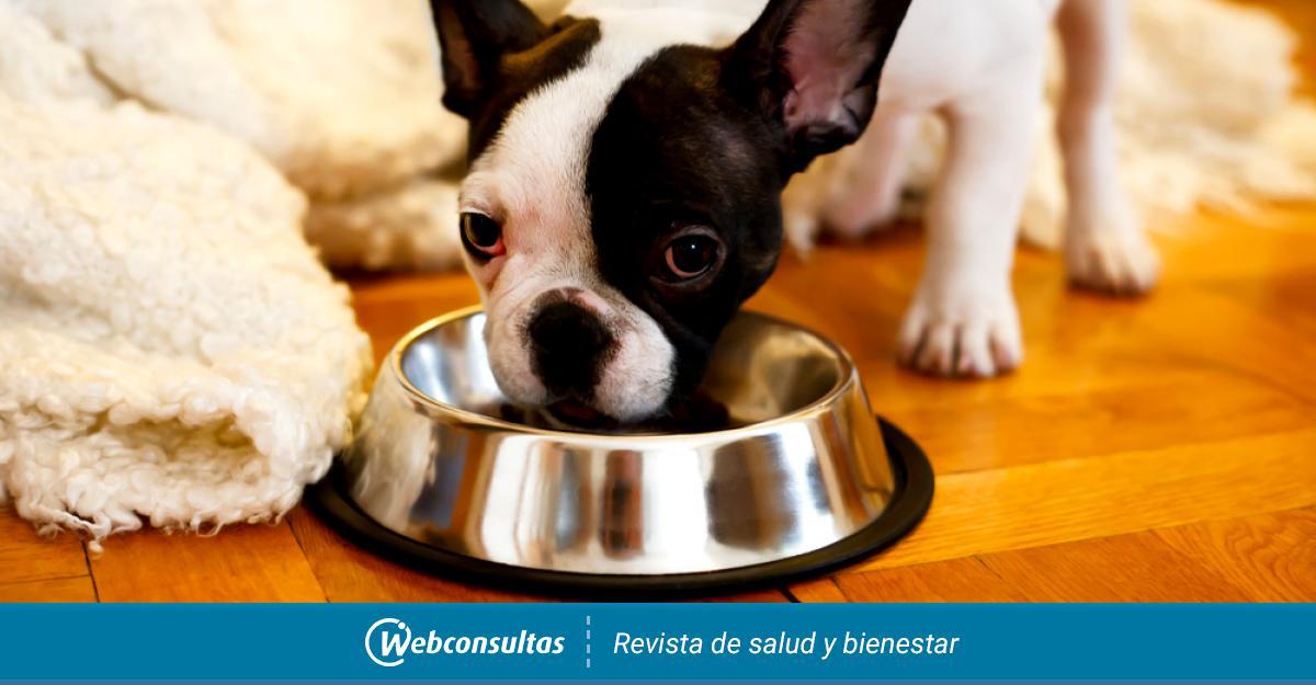 Alimentación Del Bulldog Francés Cómo Limpiarles Y Cepillarles