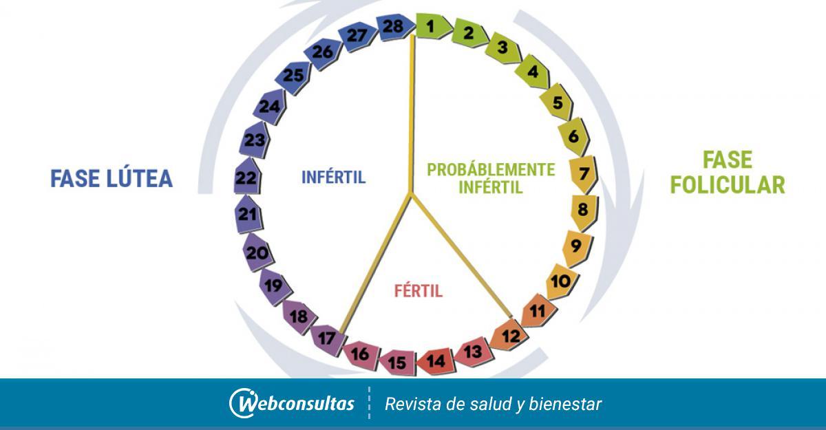 Dias Fertiles Mujer Calendario.Como Calcular Tus Dias Fertiles Para Buscar El Embarazo