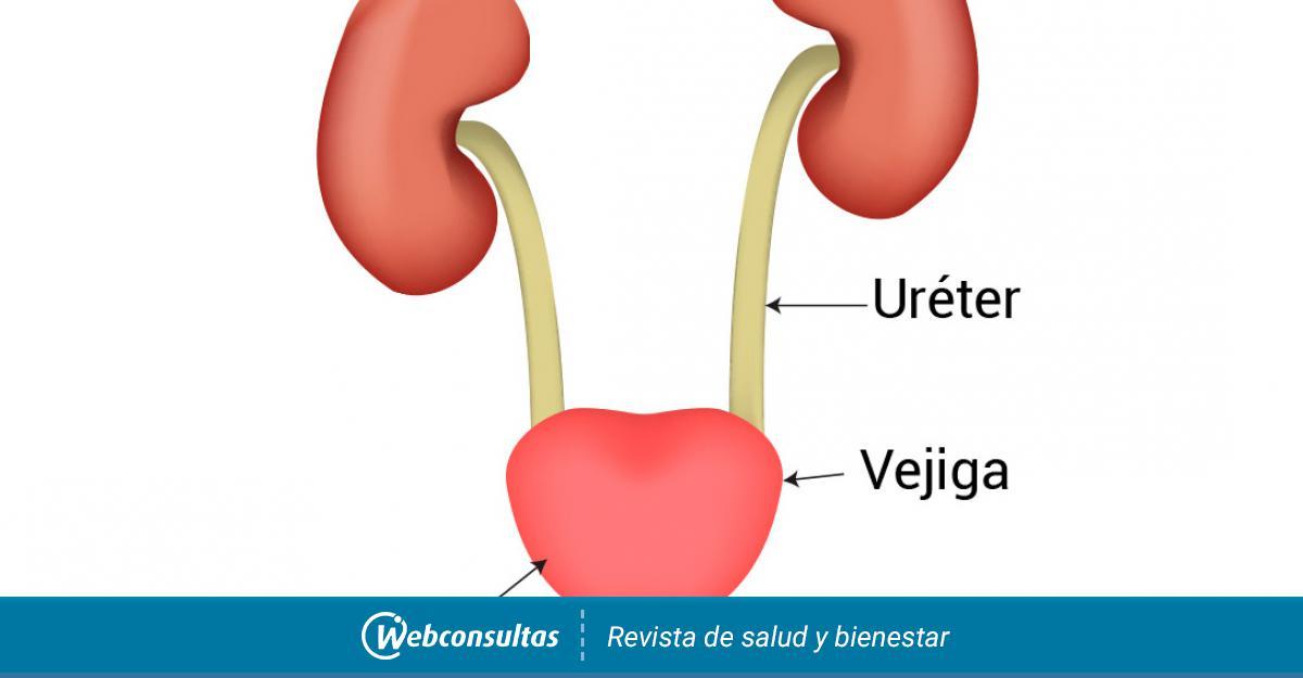 Que sintomas produce la infeccion en la orina
