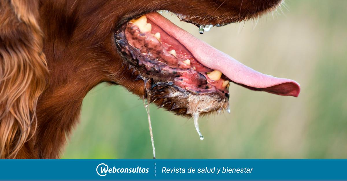 cancer bucal perros)