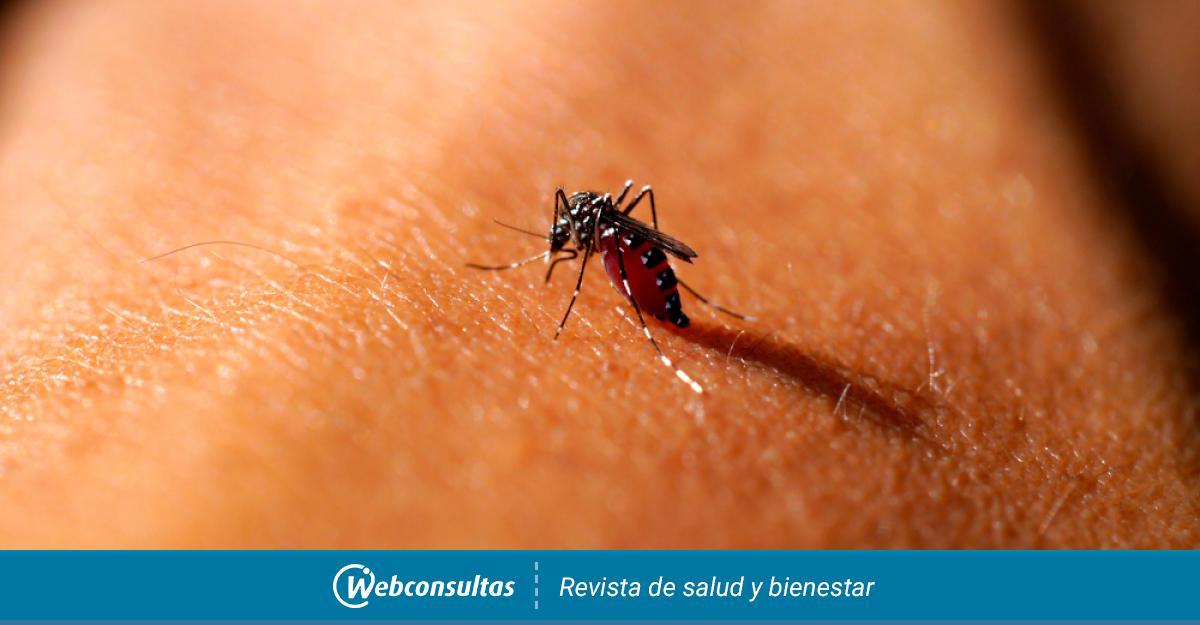 leishmaniasis en humanos en paraguay